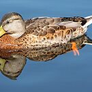 Quack by Corey Bigler