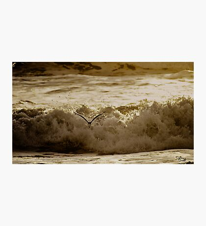 Bird Over Troubled Waters Photographic Print