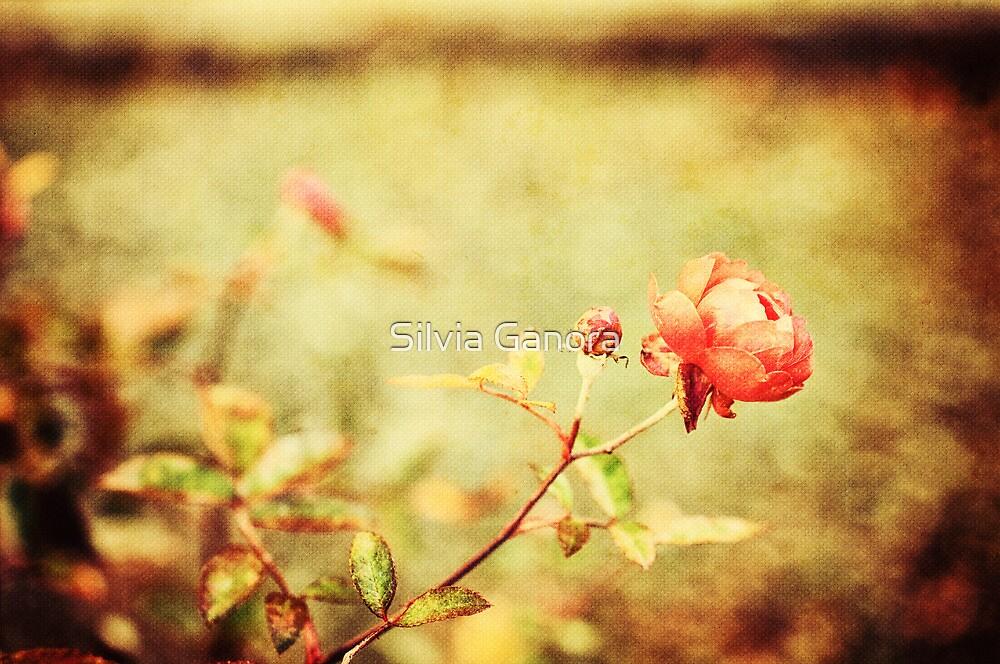 Little rose by Silvia Ganora