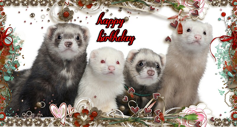 Happy Birthday Ferrets Greeting Cards by Kristie Theobald – Ferret Birthday Card