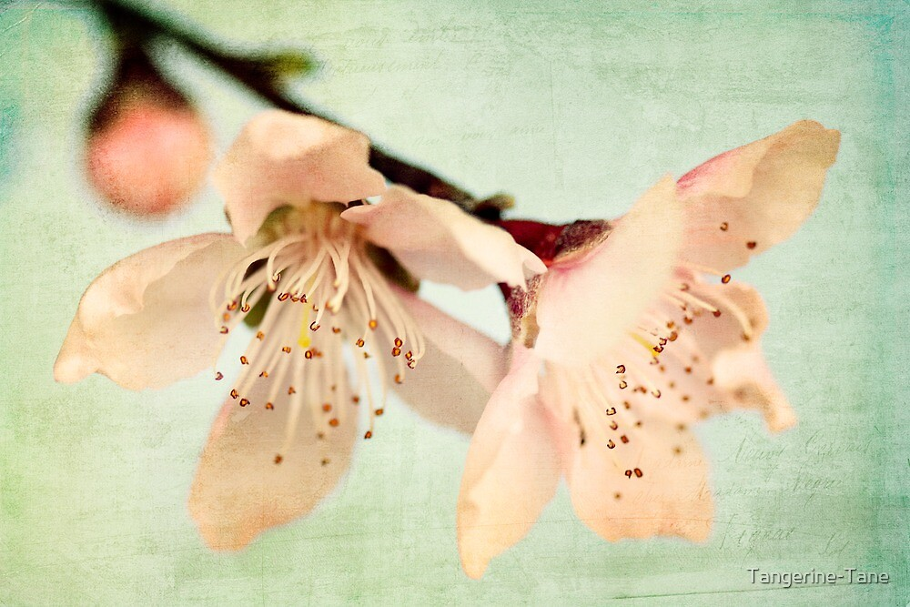 When The Wind Blows Softly, The Blossoms Whisper Your Name by Tangerine-Tane