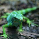 Green Liz by Judd3rman