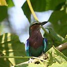 Bird by Judd3rman