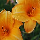 Yellow Day Lilies by bunnij