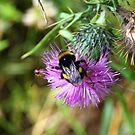 Buzzy Bee by dgscotland