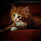 Kitten on the couch by Alan Mattison