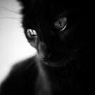 Black beauty... by Louise LeGresley