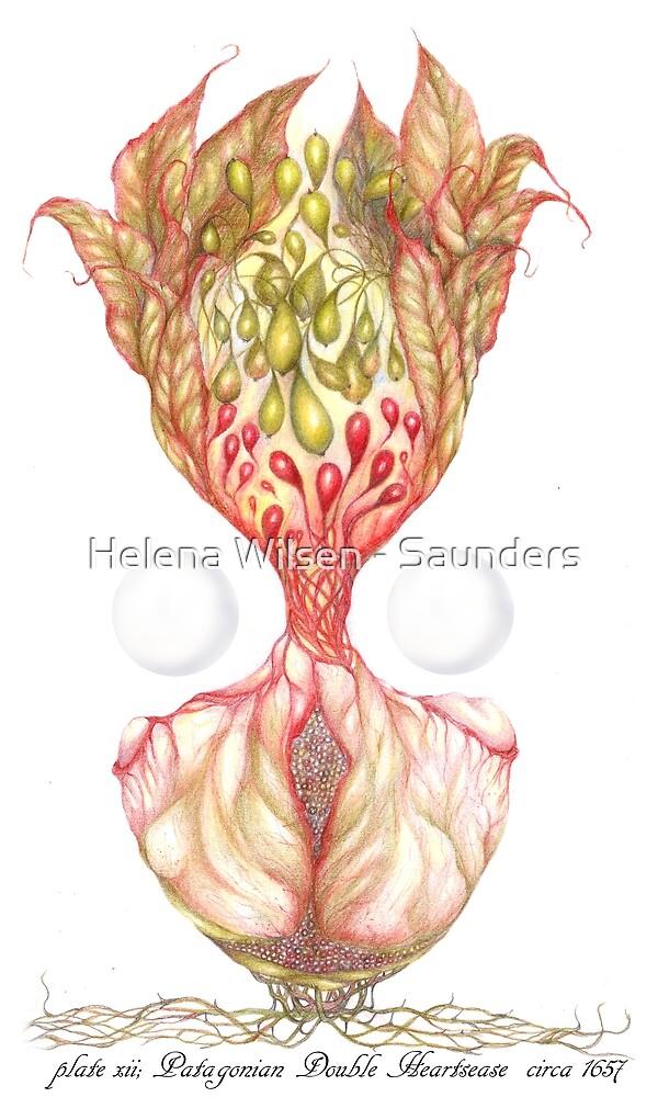 The Patagonian Double Heartsease Plant  by Helena Wilsen - Saunders