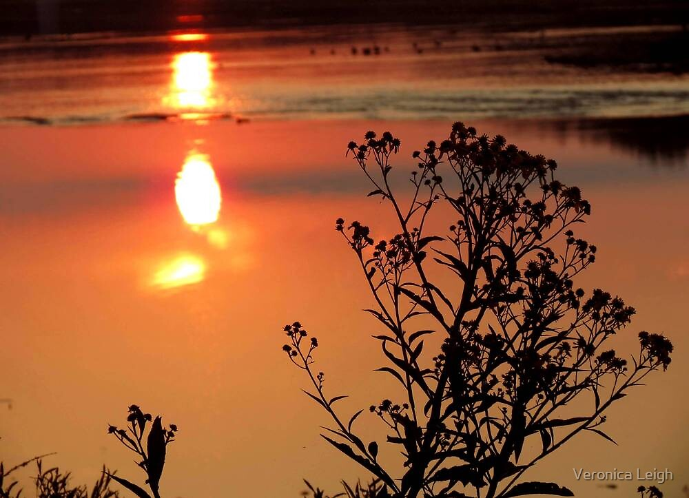 River Weeds at Sunrise by Veronica Schultz