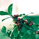 Holly bush with red berries von VanGalt