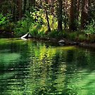 Light on the Lagoon by Barbara  Brown
