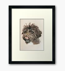 Teddie the little Lagotto Framed Print