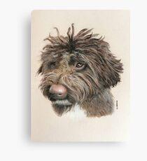 Teddie the little Lagotto Canvas Print