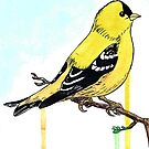 Goldfinch by Eric Weiand