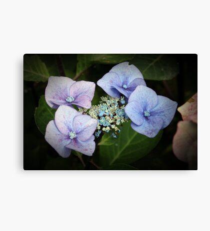 Hydrangea Flower Canvas Print