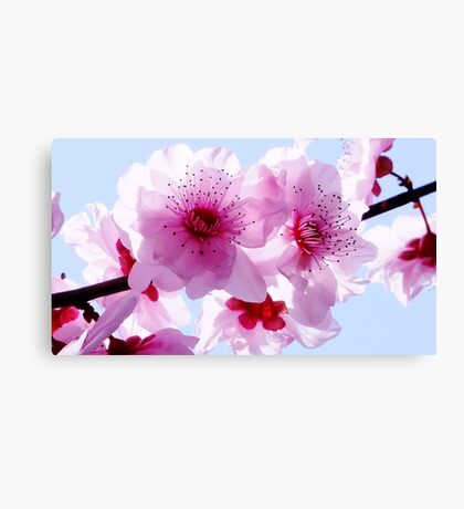 Blossom Time Canvas Print