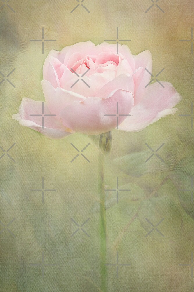 Only a Rose by Catherine Hamilton-Veal  ©