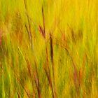 A prairie impression - Irwin Prairie Nature Preserve  by MLabuda