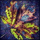 Fallen Leaf  by Susan  Detroy