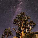 Moonlit Pine by Leasha Hooker