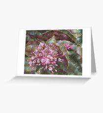 Clerodendron Greeting Card