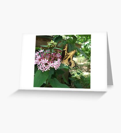 GIANT SWALLOWTAIL ON CLERODENDRON Greeting Card