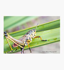 Hoppy Photographic Print