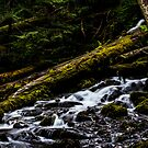 Lower Upper Proxy Fall by cymcgraw