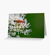 Soldier Beetle Greeting Card