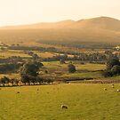 Lake District by Darren Taylor