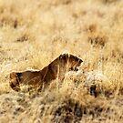 Stalking prey by David McGilchrist