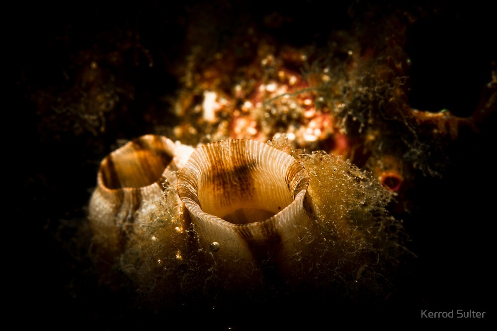 Tube Worm by Kerrod Sulter