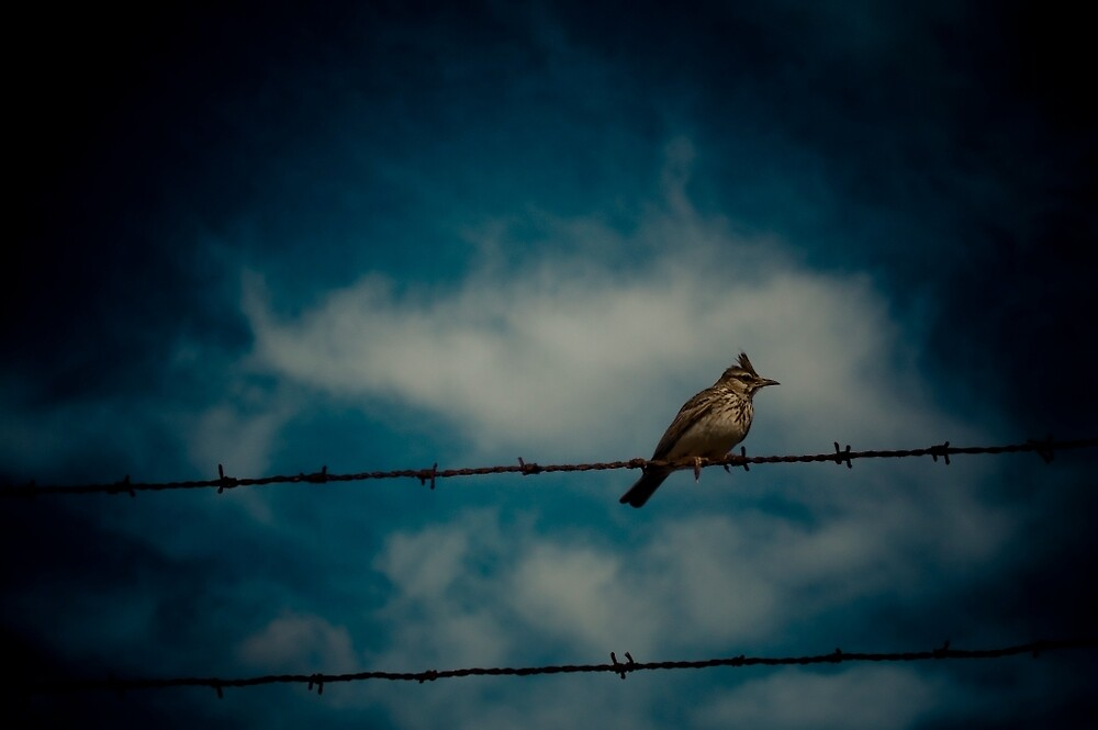 Bird on a Wire by Darren Taylor