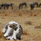 Reality of the Serengeti by David McGilchrist