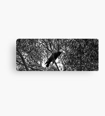 Crowing in b/w Canvas Print
