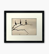 The Snappy Conversation of Cormorants Framed Print