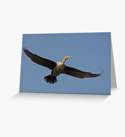 Flying Cormorant Greeting Card