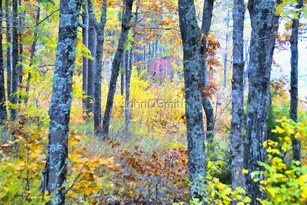 Painted Forest    by JohnDSmith