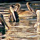 Pelicans of love by Elenne Boothe