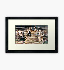 Pelicans of love Framed Print