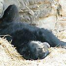 Sleeping Bear, Queens Zoo, Flushing Meadow Park, Queens, New York by lenspiro