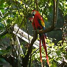 Colorful Birds, Aviary, Queens Zoo, Flushing Meadow Park, Queens, New York by lenspiro