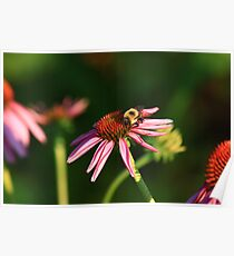 Bumble me Daisy Poster