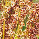 Rhubarb Seeds by kenwalters
