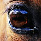 Horse Eye View by Kym Bradley