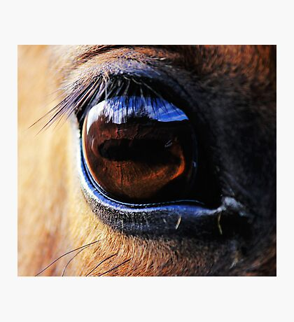 Horse Eye View Photographic Print
