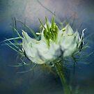 Nigella by Henrietta Hassinen