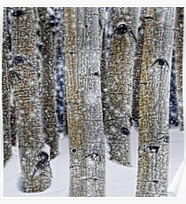 Gently Falling Snow Among the Aspens Poster