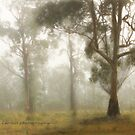 Wilberforce Morning Mist © Vicki Ferrari by Vicki Ferrari
