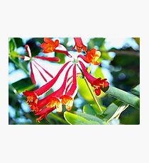 Swooping tubular flowers Photographic Print